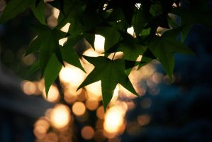 Leaf Bokeh by fadingechoes101
