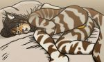 Cat on bed by SHARK-008
