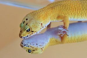 Gecko Reflection by Monkeystyle3000