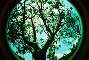 fisheye camarines - 000041 by jcgepte