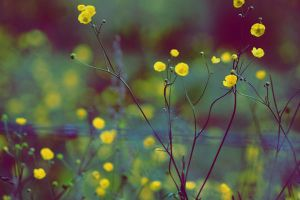 oldie flowers by Botemedlet