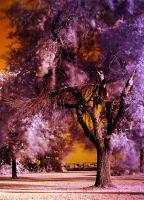 Infrared Tree by GallamorePhotography