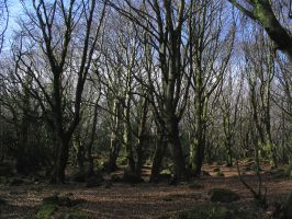 Barna Wood 7 - Forest Clearing by Bladewing-Stock
