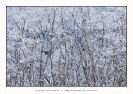 Ice Forest by joerossbach