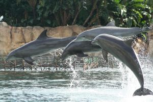 Dancing Dolphins by FroglovinPhotogirl