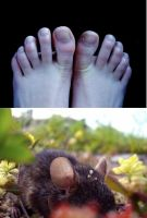 mouse feet by chiliphili