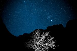 Zion Tree by forfie