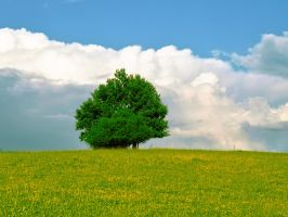 meadow with a tree by odina222
