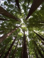 Canopy DID YOU KNOW by environment
