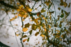 Autumn Melancholy by baumwolle