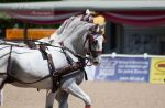 Four-in-hand Competition_62 by CalyHoney