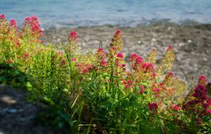 Flowers by the sea by Horroromance
