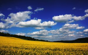 Landscape Wallpaper by Blaumohn