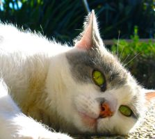My cats retarded face by Madi-Gascarr