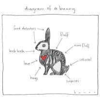 diagram of a bunny by abunnydance