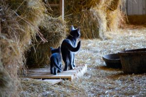 Barn Cats by Cinestress