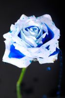 White and Blu by FotoNerdz