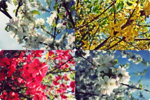 colors of spring by Noorah22