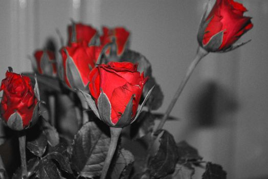 Selective Colored Roses by sunilbhar