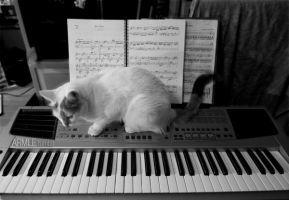 Keyboard cat by carnedepsiquiatrico