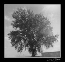duaflex tree by electricjonny