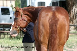 Quarter Horse Stock 38 by tragedyseen