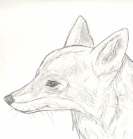 Coyote by SprayPaintHavoc