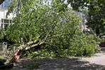 Result of a severe thunderstorm #2 by Budeltier