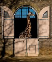 Giraff by Sjodin