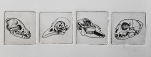 Skull Etches by Maquenda