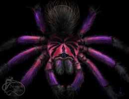 Xenesthis sp. white by NadilynBeato