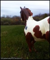~*My Proud Brother*~ by Lexykentucky