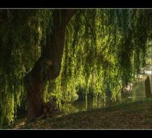 Old Man Willow 1 by Isyala