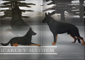 Icarus v Mayhem - Reserve Your Breeding Now! by Canidae-Mayhem
