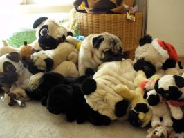 Pugsley Is Pugged Out by puggers