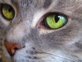 Cats Eye by athenaowl1999