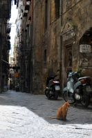 cat in naples by turulato
