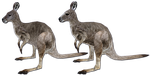 Eastern Wallaroo Updated Model by GrandeChartreuse