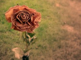 The Rose by Utopeless
