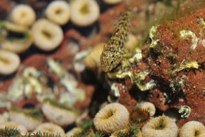 Rockpool Life by argopete
