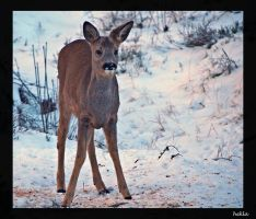 young deer by hekla01