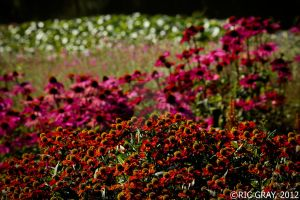 A Sea of Colour by RicGrayDesign