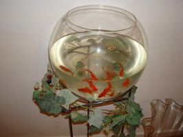 Stock: Ivy Fishbowl by FantasyFailure-Stock