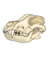 Wolf Skull by lighteningfox