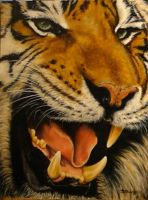 Tiger with the missing tooth. by DanBurgessTheArtist