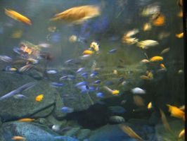 Aquarium 2 by Polly-Stock