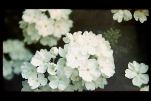 White flowers film negative by Ondrejvasak