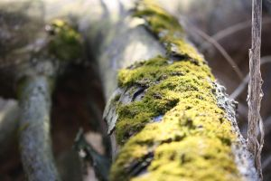 M is for March and Moss II by Foxytocin