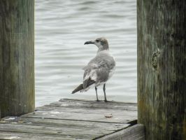Seagull by BlueMoon30