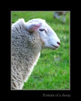 Portrait of a sheep by PhilipCapet